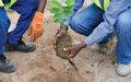 Reforesting Somalia